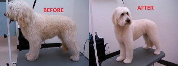 Pictures - Honey Pets Grooming Dept.: http://hpgroomingdept.weebly.com/pictures.html